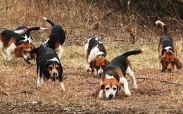 Chuyện bầy chó săn và cục xương: Nếu năng lực chỉ có vậy thì đừng mơ được tăng lương thăng chức, hãy chấp nhận làm nhân viên quèn đi!