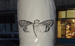 Cicada 3301: Tổ chức bí ẩn và kì lạ nhất trên Internet là ai?