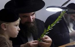 Ông bố Do Thái dạy con 1+1 > 2 và sau này cậu bé trở thành CEO nổi tiếng: Bài học về tư duy khác biệt của người giàu