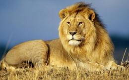Chuyện muỗi và sư tử: Đừng bao giờ lơ là mất cảnh giác ngay cả khi bạn đang ở vị trí cao nhất