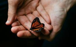 Hiệu ứng cánh bướm: Đổi đời từ những hành động không liên quan tưởng chừng là nhỏ nhất