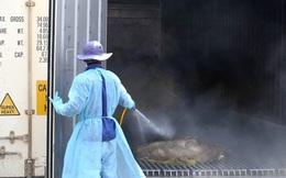Tiếp cận lò tiêu hủy hàng ngàn con heo bị tiêm thuốc an thần