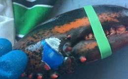 Hình ảnh chú tôm hùm mang logo Pepsi khiến người ta lo ngại về tương lai biển cả