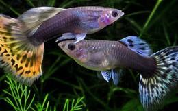 Khoa học phát hiện ra loài cá cũng có cá tính và nó có thể giúp con người biết về tính cách của mình