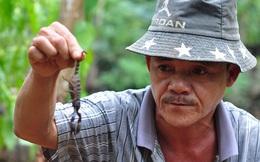 Theo chân thợ săn bọ cạp rừng