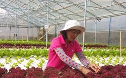 Lâm Đồng sẽ trở thành Trung tâm nông nghiệp giá trị cao của Đông Nam Á