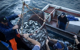 Đại sứ Nguyễn Hồng Thạch kể chuyện doanh nghiệp đầu tiên của Việt Nam nhập khẩu cá, làm nước mắm tại xứ dầu mỏ