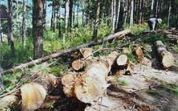 Lỗ lớn, nợ nhiều, Giấy Tân Mai muốn chuyển nhượng hàng ngàn hecta rừng ở Lâm Đồng