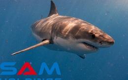 """SAM Holdings – cá mập tiềm lực mạnh nhất trong chương trình Shark Tank nhưng có kết quả kinh doanh khá """"nghèo nàn"""""""