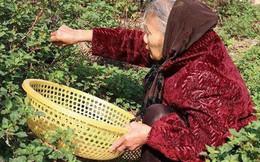 Hà Nội: Cả đời tích cóp được hơn 200 triệu đồng, cụ bà 88 tuổi mang đi đóng hụi, khi đòi nợ, chủ hụi chỉ móc trả 239.000 đồng