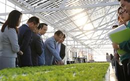 FLC bắt tay đối tác Nhật đầu tư 1,5 tỷ USD vào nông nghiệp công nghệ cao