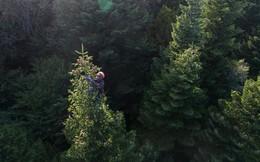 Hàng trăm người dân làng ở Georgia liều mạng vì cây thông Noel