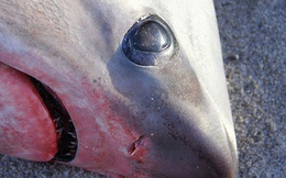 Chuyện lạ: Giờ nước Mỹ đang lạnh đến mức đến cá mập cũng phải chết cóng