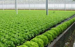 Trồng rau sạch quanh năm không cần đất và ánh sáng mặt trời, startup này hứa hẹn giúp người nông dân tăng năng suất lên 130 lần
