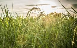 Biến đổi khí hậu đang khiến thực vật chúng ta ăn chứa nhiều đường mà lại ít dinh dưỡng hơn
