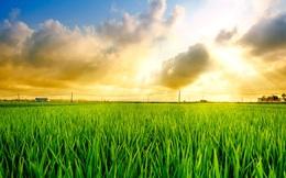 """Để nông nghiệp Việt Nam """"cất cánh"""", hãy để người nông dân tự quyết định trên mảnh đất của mình"""