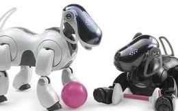 Mảng sản xuất robot thú cưng của Sony chính thức hoạt động trở lại sau 12 năm đình chỉ
