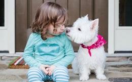 Đã bao giờ bạn trải qua cảm giác mất đi một người bạn thân - chú chó mình vẫn yêu thương?