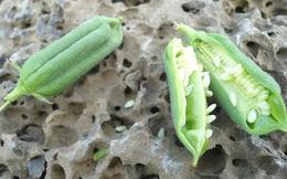 Ăn mỗi ngày nhưng bạn sẽ choáng khi biết hình dạng thật của các loại hạt, quả này trước khi thu hoạch