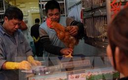 Nguy cơ virus cúm gia cầm H7N9 lây lan mạnh tại Trung Quốc