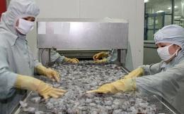 Cần những giải pháp đột phá để xuất khẩu tôm đạt kim ngạch 10 tỷ USD