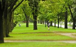 Nghiên cứu cho thấy phủ xanh không gian đô thị giúp người dân hạnh phúc hơn