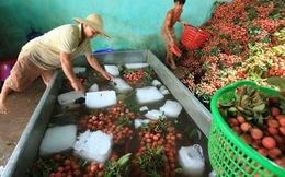 Trung Quốc sẽ mua 40.000 tấn vải Bắc Giang