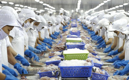 Gặp rào cản từ thị trường Mỹ, cá tra Vĩnh Hoàn dịch chuyển dần về nội địa và tìm đến khách hàng Trung Quốc