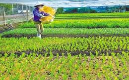 Để xây dựng phân khúc nông sản giá trị cao