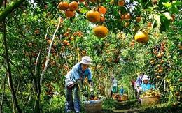 Thêm một góc nhìn về khởi nghiệp nông nghiệp