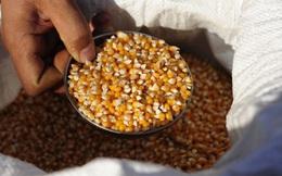 Vì sao nhiều hãng hạt giống lần lượt về tay Trung Quốc?