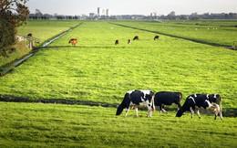 Hà Lan: Quốc gia nhỏ bé có thể nuôi cả thế giới