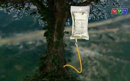 """Truyền dịch cứu 1.000 cây cổ thụ: """"Không sử dụng túi truyền dịch của Trung Quốc"""""""
