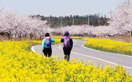 Lý do khác thường này đã thu hút du khách Trung Quốc đến với Hàn Quốc