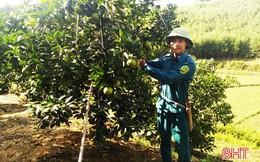 9X sở hữu vườn cam 360 gốc, thu hàng trăm triệu đồng mỗi năm