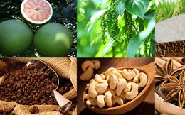 Chuyên gia Hiệp hội bán lẻ Á - Phi: Thực phẩm, nông sản Việt Nam có tiềm năng lớn xuất khẩu vào Ấn Độ, nên bán online trước