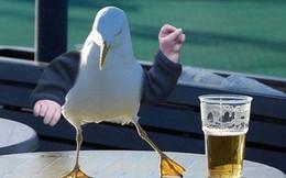 """Mỹ: Chim say rượu khiến dân sợ hãi, cảnh sát bảo """"Để yên nó khắc tỉnh lại mà"""""""