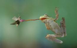 Vì sao có não lớn hơn nhưng con người không thể bắt được ruồi đang bay như ếch?