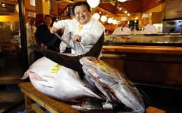 Đây là lý do tại sao con cá ngừ vây xanh này được bán với giá trên trời 1,8 triệu USD