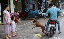 Hà Nội xem xét gắn chip cho chó để quản lý