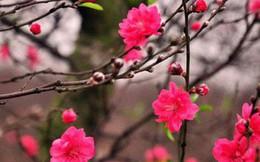 Những loại hoa mang tài, rước lộc vào nhà nhất định phải trưng ngày Tết