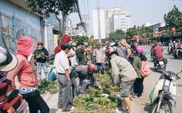 Lan rừng xuống phố đắt hàng ở Sài Gòn