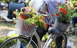 """Bế mạc hội hoa xuân Tao Đàn, người dân """"mót"""" lại hoa sắp cho vào xe rác"""