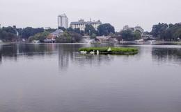 Đàn thiên nga ở hồ Gươm được đưa sang hồ Thiền Quang