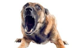 Khoa học đã chứng minh: Tâm lý càng yếu, bạn càng dễ bị chó cắn