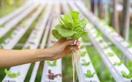 """Công thức giúp nông nghiệp Nhật """"được mùa, được giá"""""""