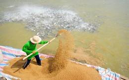 """Vingroup lấn sân mảng thức ăn chăn nuôi: Mua 24% cổ phần Việt Thắng từ tay """"vua cá tra"""" Hùng Vương"""