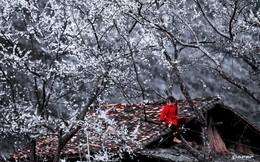 Đến Hà Giang mùa xuân, ngẩn ngơ xem đá nở hoa