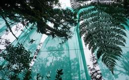 """Những """"thợ săn mây"""" Amazon và cách bảo vệ rừng có một không hai trong thời kì biến đổi khí hậu toàn cầu"""