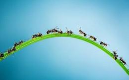 7 bài học cuộc sống tôi học được từ lũ kiến
